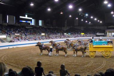Horses at Indiana Coliseum