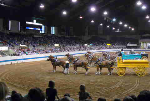 Horses at Indiana Coliseum