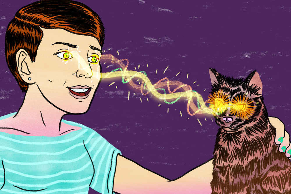 Does Toxoplasmosis in Cats Make People Insane in the Brain? - Thrillist