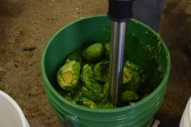 Blending avocados