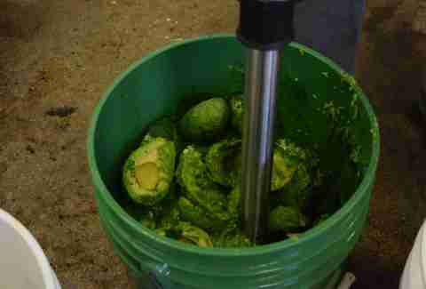 Blending avocados