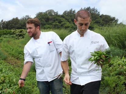 chefs forage hawaii