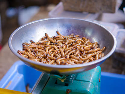 Maggots in Bowl on Table