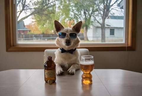 Image result for dog beer