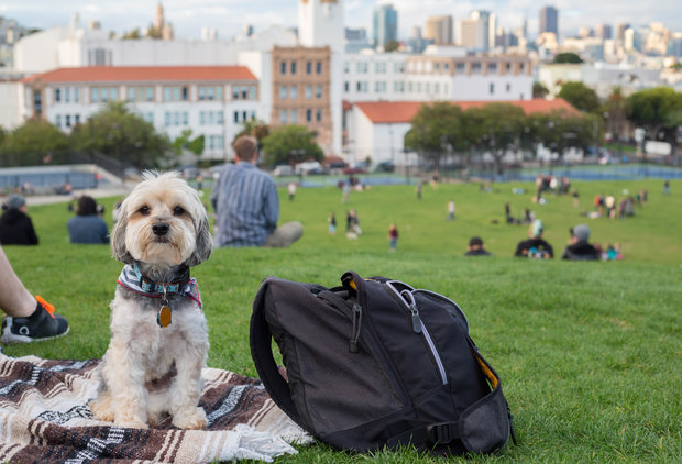 The Best Dog-Friendly Spots in the East Bay