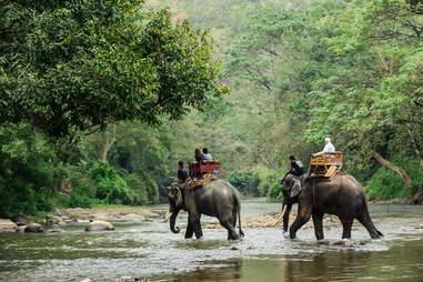 Traveling on elephants