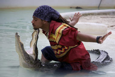 alligator wrestling