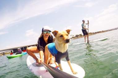 SUP Pups San Diego - Stand Up Paddle Boarding
