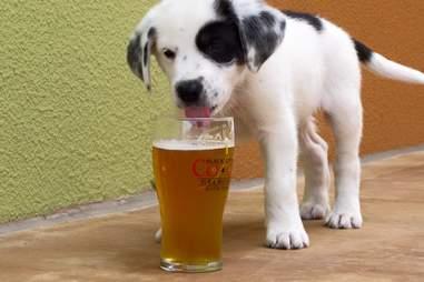 Dog Bar Charlotte