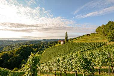 austria vineyard