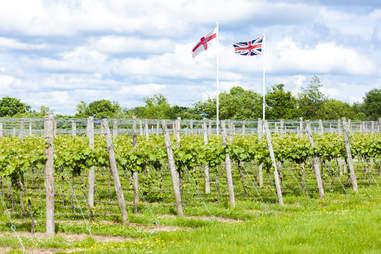 England vineyard