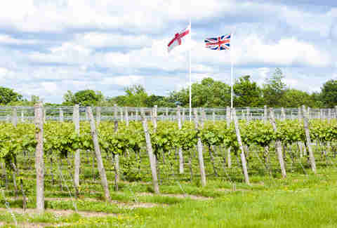 England vineyard