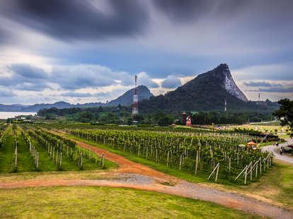 Thailand vineyard winery