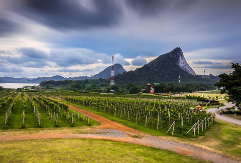 Thailand vineyard winery
