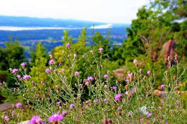 Mt. Beacon Trail