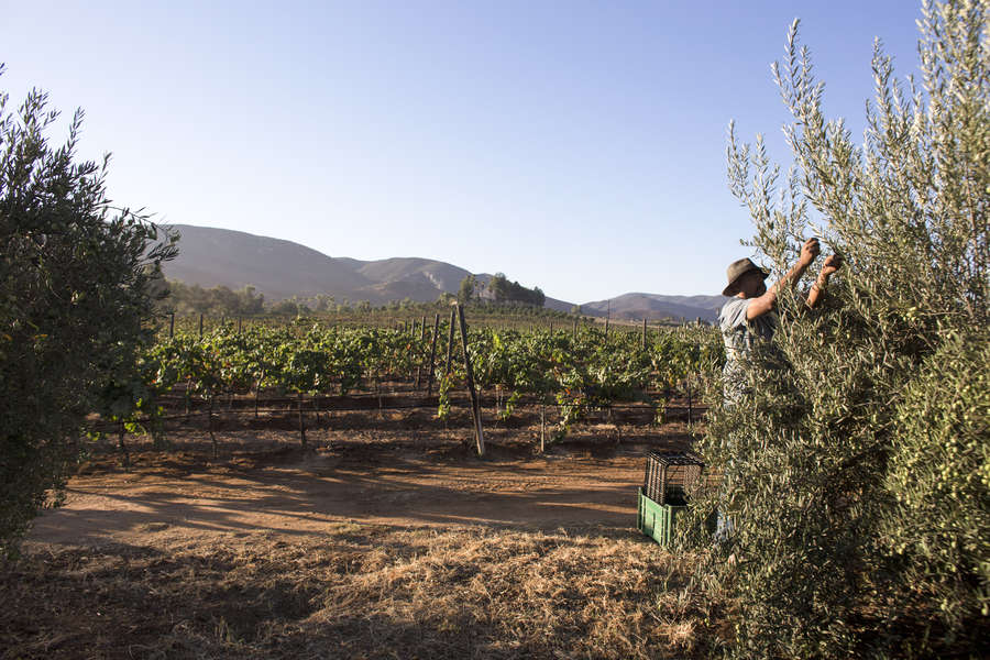 The Valle de Guadalupe Is Mexico's Wine Country That You Need to Be Visiting, Like, Yesterday