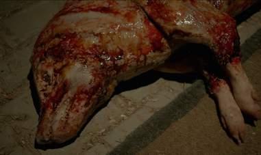 american horror story my roanoke nightmare pig