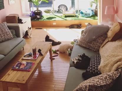 Philadelphia kitty cafe