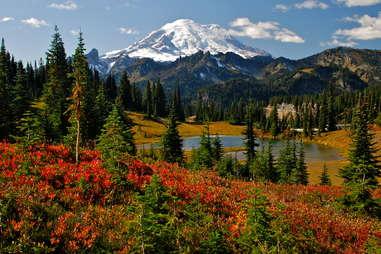 Mt. Rainier paradise