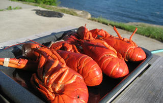 Boston Lobster Tours