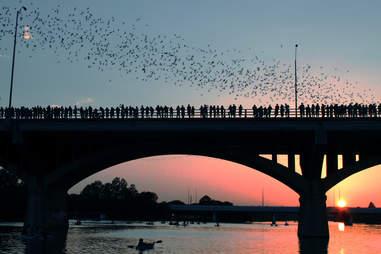 Congress Avenue Bridge bats in Austin during sunset