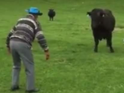 old man fighting bull