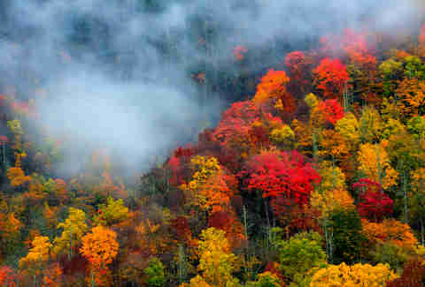 best places to see fall foliage and fall colors in the us thrillist