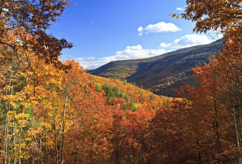 Catskills fall colors