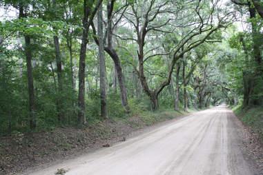 Entrance Road to Botany Bay Plantation