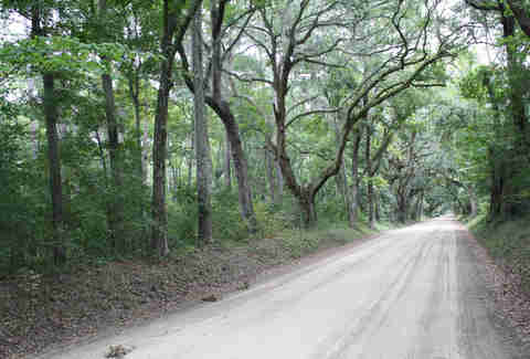 Entrance Road to Botany Bay Plantation