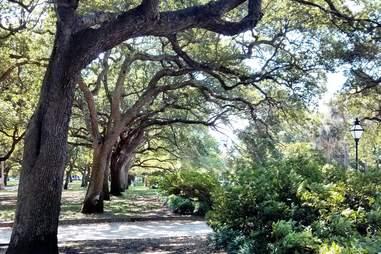 Glimpses of Charleston