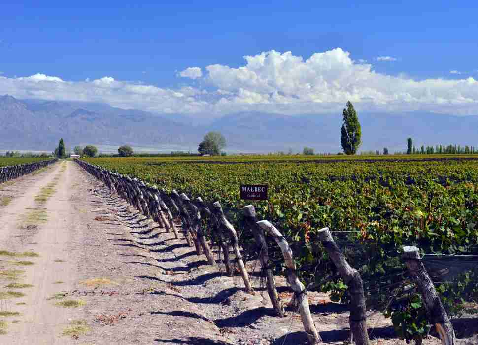 Malbec Vineyards
