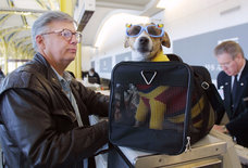 The Worst Things You Can Do When Flying With Your Pet