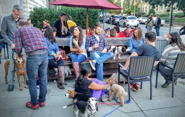 The Most Dog-Friendly Bars in DC