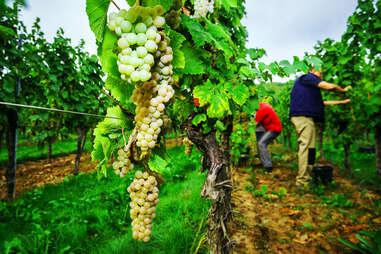 Alsace, France Vineyard
