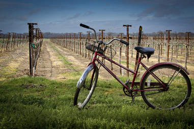 biking in wine country