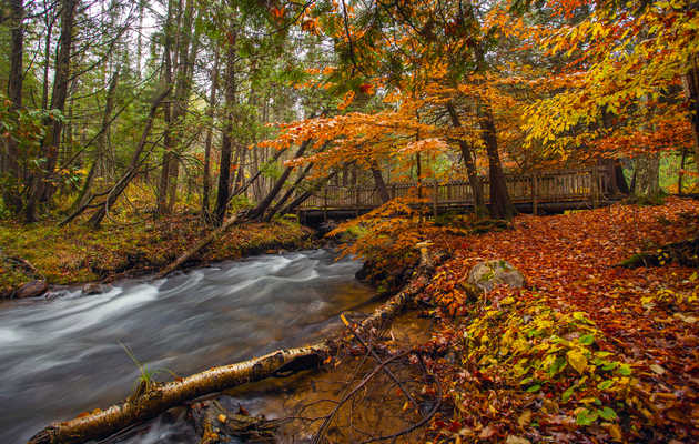11 Michigan Summer Getaways That Are Actually Better in the Fall