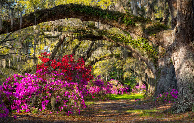 Charleston Tours Locals Will Love