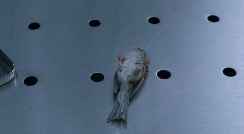 Bird Westworld
