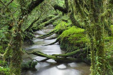 Enchanted Forest, Queulat National Park (Chile)