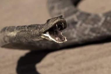 snake on hbo westworld