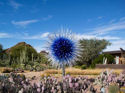 desert botanical garder