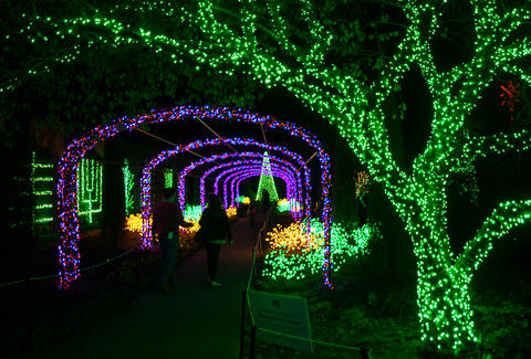 Cheekwood Lights