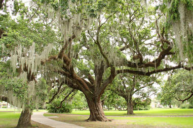 City Park in New Orleans