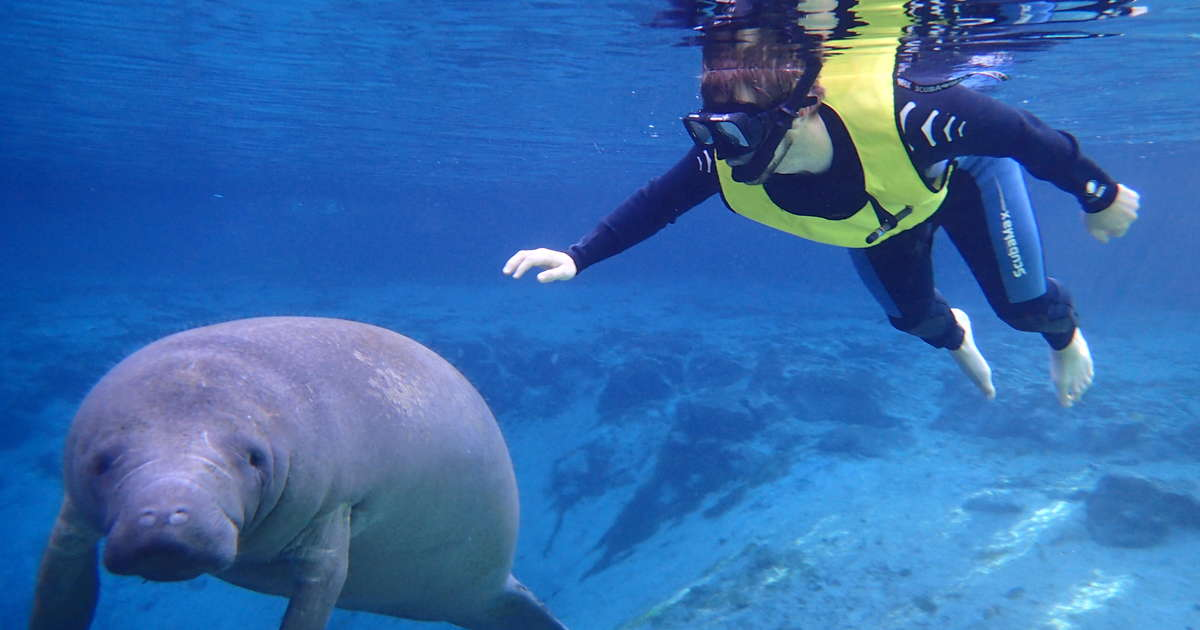 How & Where to Swim With Manatees in Citrus County ...