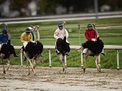 Fair Grounds Race Course & Slots