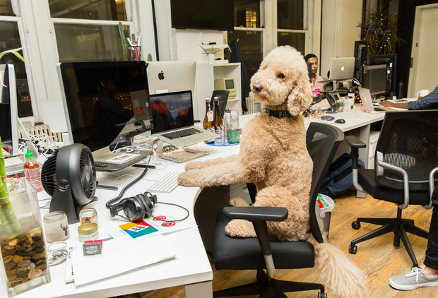 7 NYC Office Dogs That Are Cooler Than Your Co-Workers