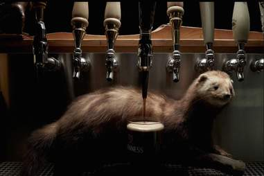 taxidermy ferret by Guinness beer tap