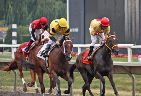 Horse Race Betting - Tips For Becoming A Betting Master