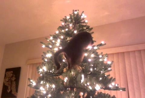 cat on a christmas tree